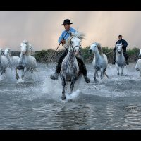 20_Camargue Gallop by Sue Critchlow LRPS CPAGB